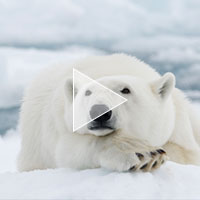 svalbard_realm_of_the_ice_bear