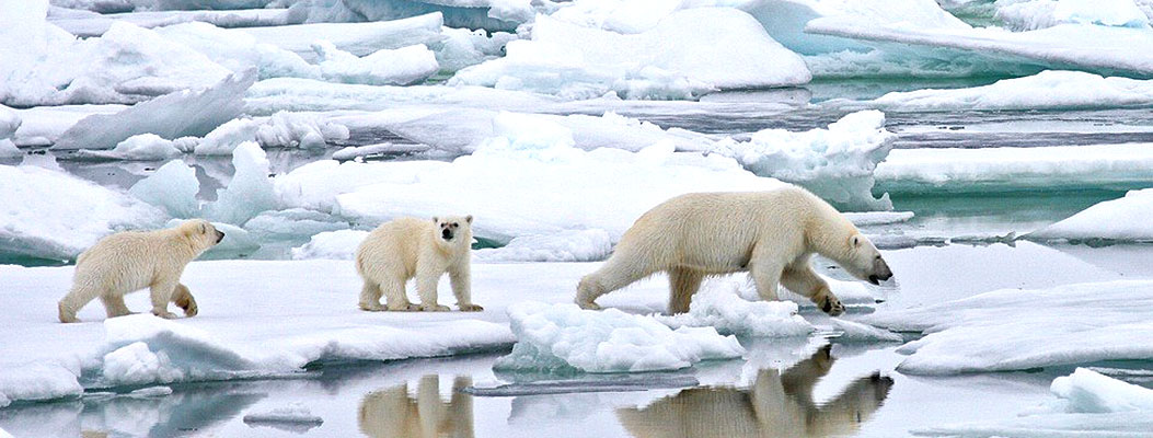 svalbard_realm_of_the_ice_bear_sub_banner